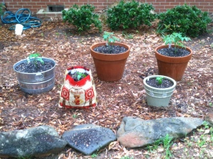 The start of our front yard garden with more to come