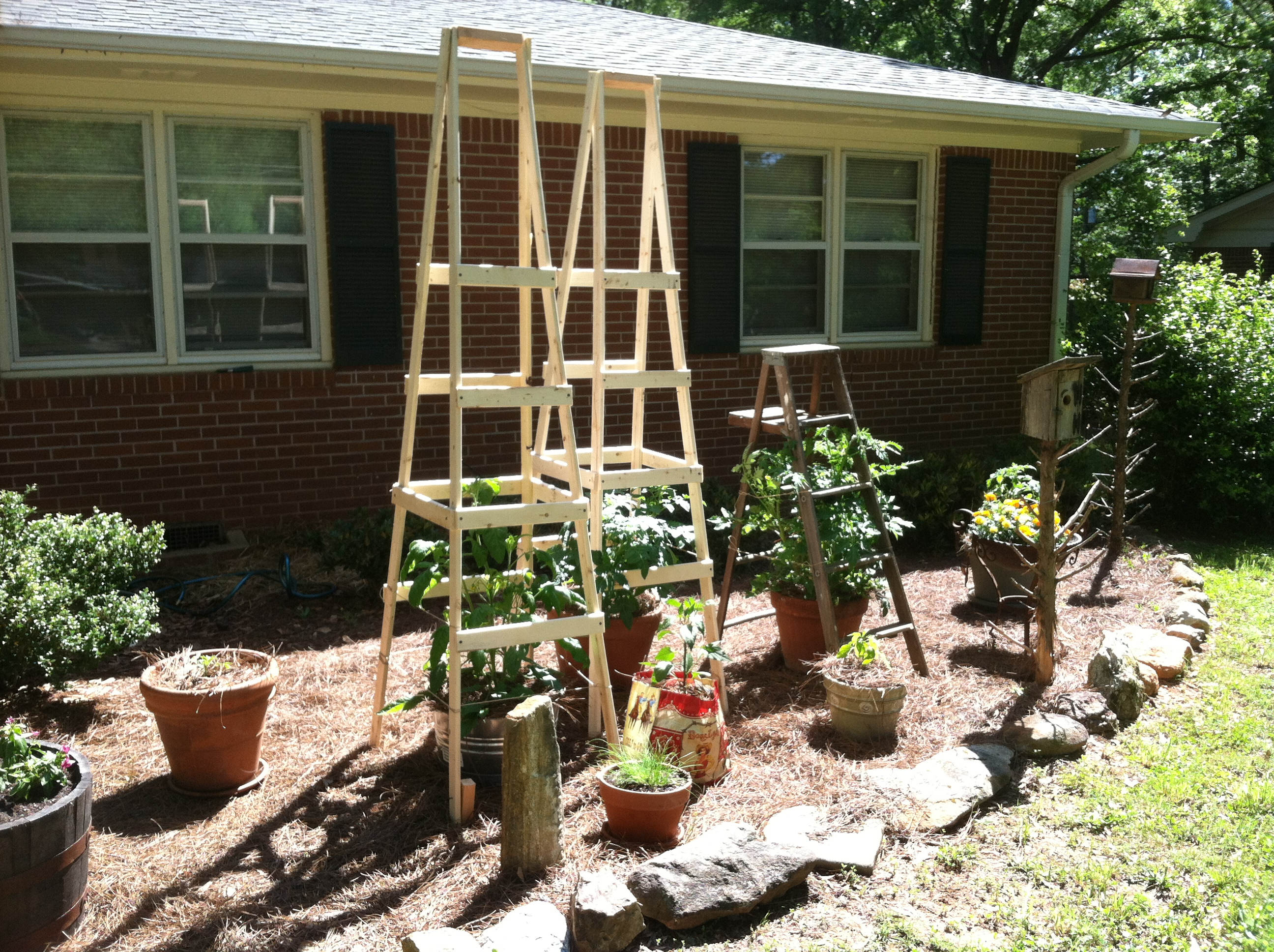 Todds Tomato Ladders No More Lame Cages Survival Sherpa