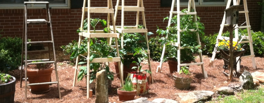 Todd's Tomato Ladders | www.TheSurvivalSherpa.com
