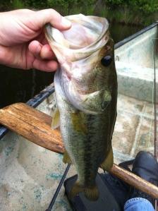 3 pound bass