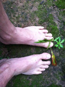 Notice the 'feeler' toe in front of the leaf. It's been a lifelong victim.