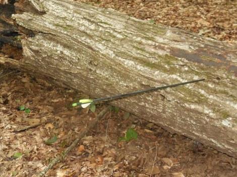 stump-shooting-as-a-survival-skill