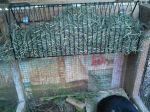 Grace (DST Networker) up-cycled a 25 cent yard sale find to dispense hay in her rabbit hutch.