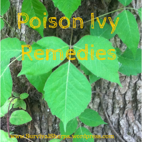 Pondering Poison Ivy Natural Remedies and Itch Relief