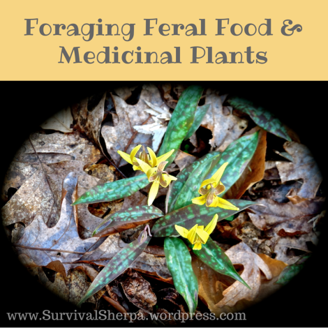 foraging-feral-food-wildcrafting-page