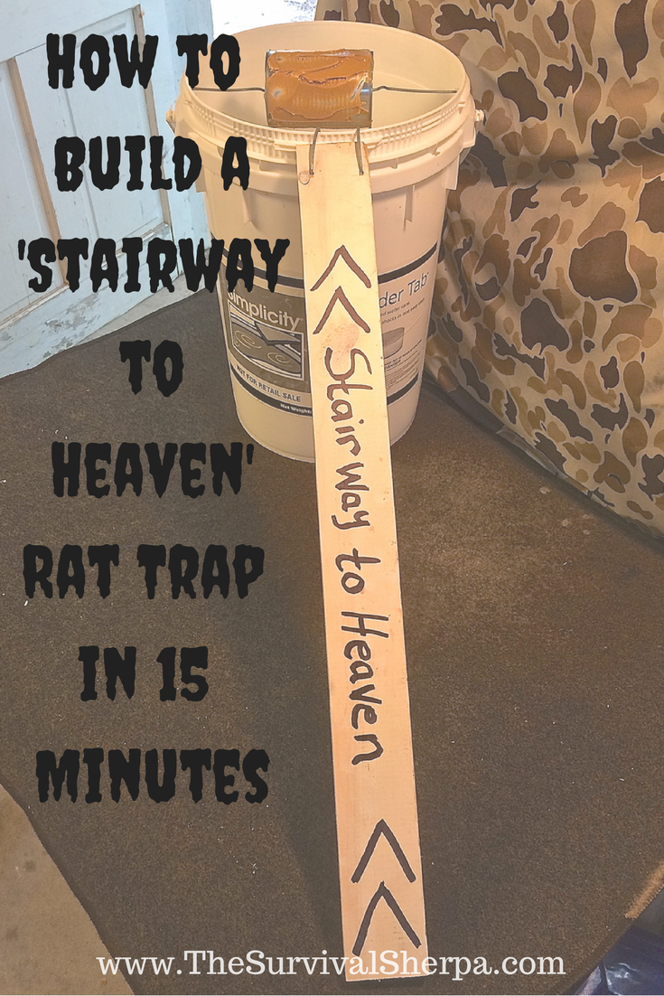 how to build a u201cstairway to heaven u201d rat trap in 15 minutes