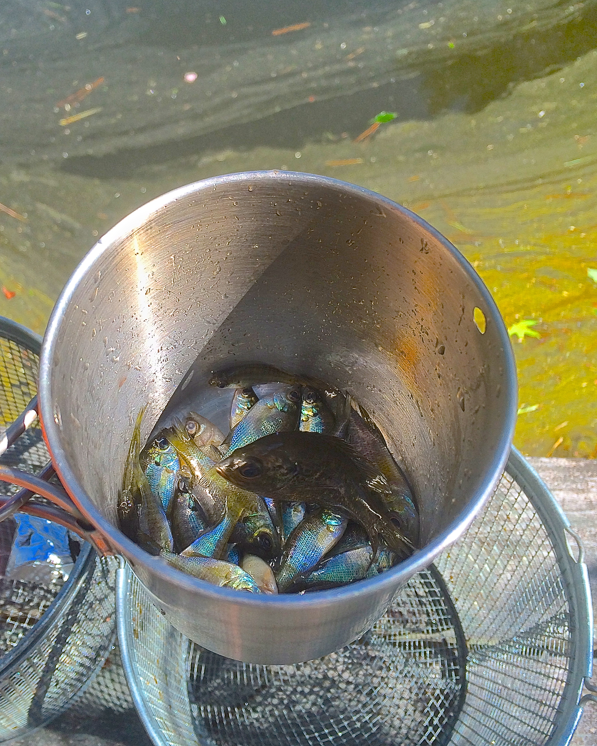 Surviving large on small stuff intellihub for How to make a fish trap for big fish