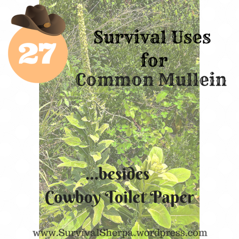 27 Survival Uses for Common Man Mullein Besides Cowboy Toilet Paper