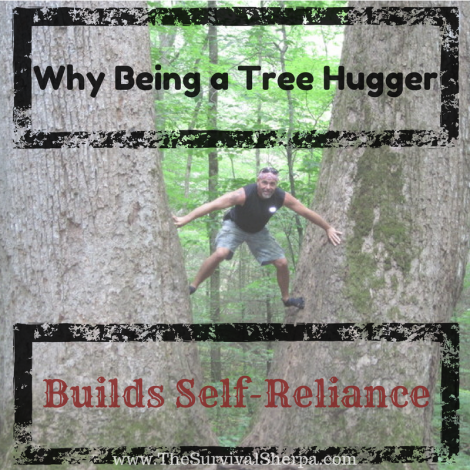 tree-hugger-self-reliance-uses-american-sycamore