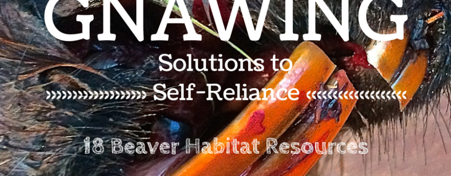 Gnawing Solutions to Self-Reliance- 18 Beaver Habitat Resources - www.TheSurvivalSherpa.com