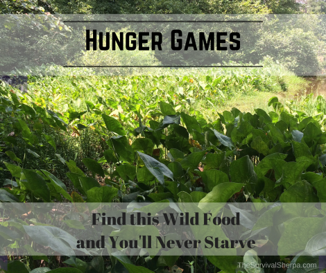 Hunger Games: Find this Wild Food and You'll Never Starve - TheSurvivalSherpa.com