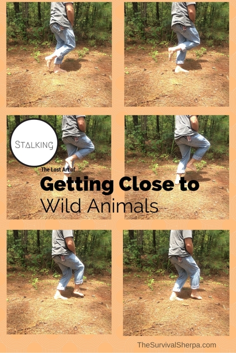 Stalking- The Lost Art of Getting Close to Wild Animals - TheSurvivalSherpa.com