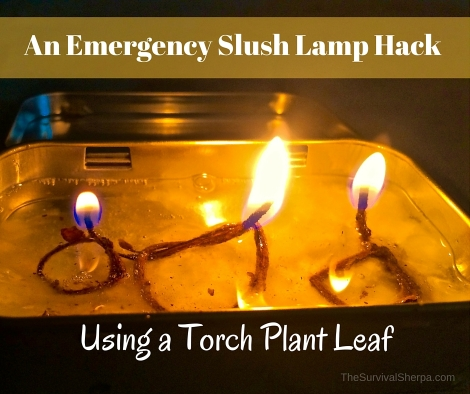 An Emergency Slush Lamp Hack Using a Torch Plant Leaf - TheSurvivalSherpa.com