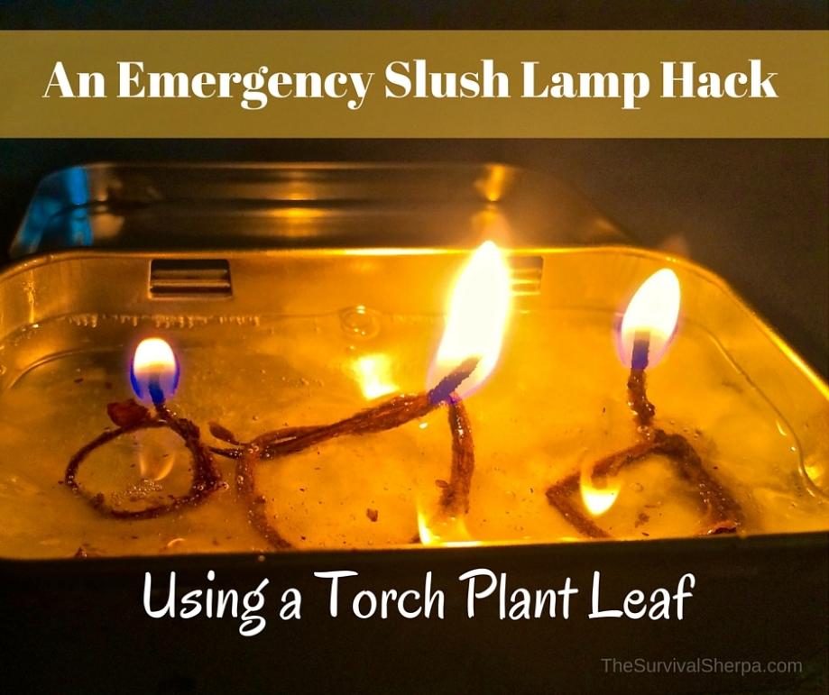 An Emergency Slush Lamp Hack Using a Torch Plant Leaf - TheSurvivalSherpa.com