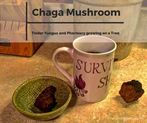 Chaga Mushroom- Tinder Fungus and Pharmacy Growing on a Tree - TheSurvivalSherpa.com