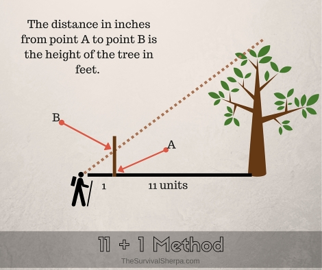 3 Easy Ways to Estimate Height in the Woods - TheSurvivalSherpa.com