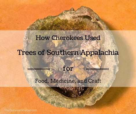 How Cherokees Used Trees of Southern Appalachia for Food, Medicine, and Craft - TheSurvivalSherpa.com