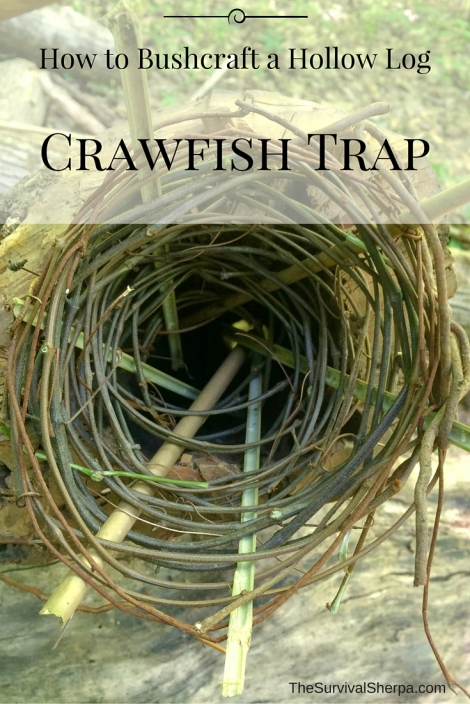 How to Bushcraft a Hollow Log Crawfish Trap - TheSurvivalSherpa.com