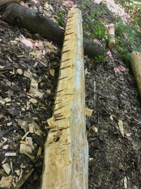 Dirt Poor Floor Joists for an Off Grid Log Cabin - TheSurvivalSherpa.com